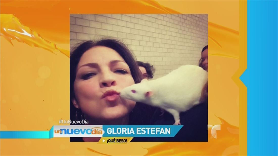 Gloria Estefan besa a una rata y comparte la foto Instagram (VIDEO)